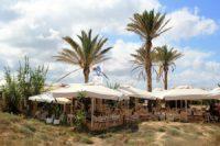 Restaurante Juan y Andrea en Formentera. Palmeras